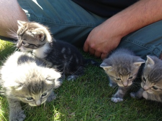 kittens-all-four