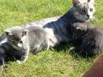 kittens-and-mom